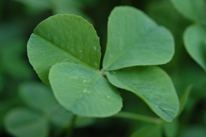 4-leaf-clover1